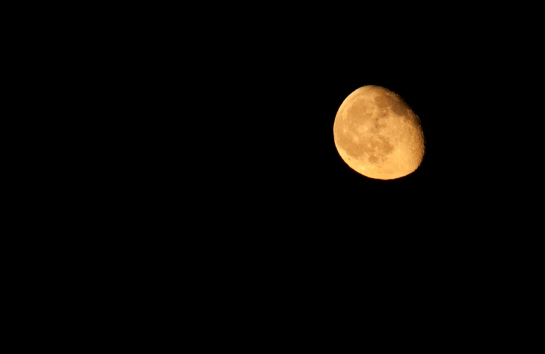 The Moon rises and brings activities to a close at about midnight. Nikon 300mm f/8, ISO 1250, 1/125 sec.