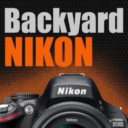 Backyard Nikon